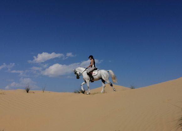 new desert set 4